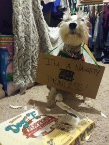 Mollie was puppy shamed after eating ALL the puppy Christmas treats for her cousins!